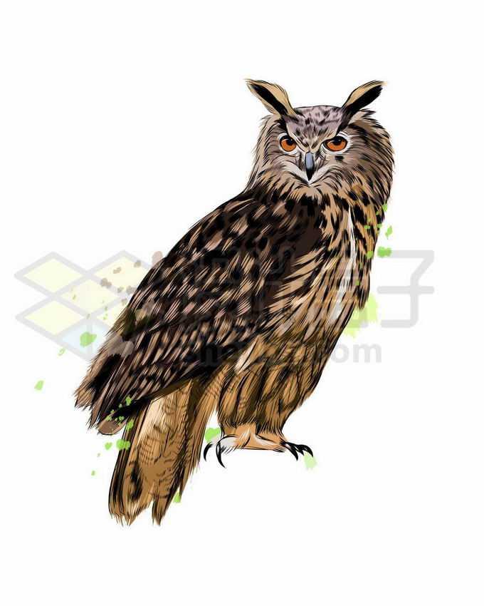 一只站立的猫头鹰写实风格水彩插画8725565矢量图片免抠素材免费下载