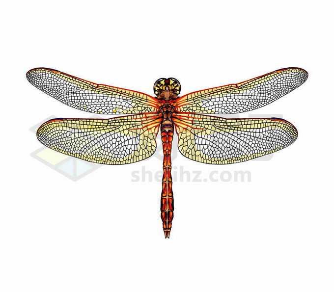 一只张开金色翅膀的红色蜻蜓昆虫写实风格水彩插画2107686矢量图片免抠素材免费下载