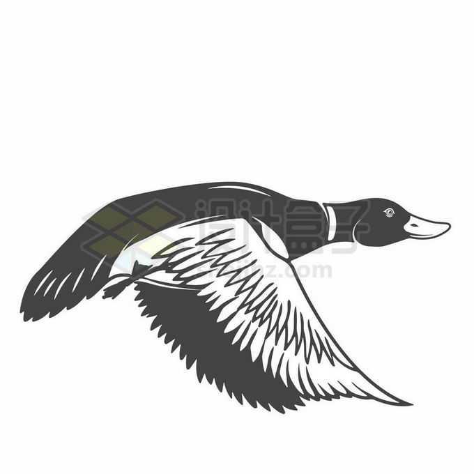 飞行中的鸭子野鸭黑色线条插画6857863矢量图片免抠素材