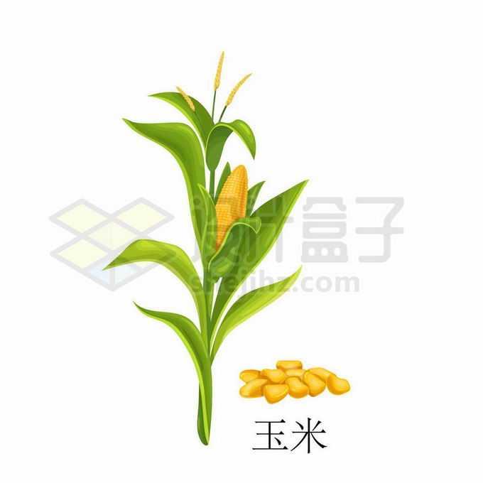 玉米种子粮食农作物彩绘配图3945529矢量图片免抠素材