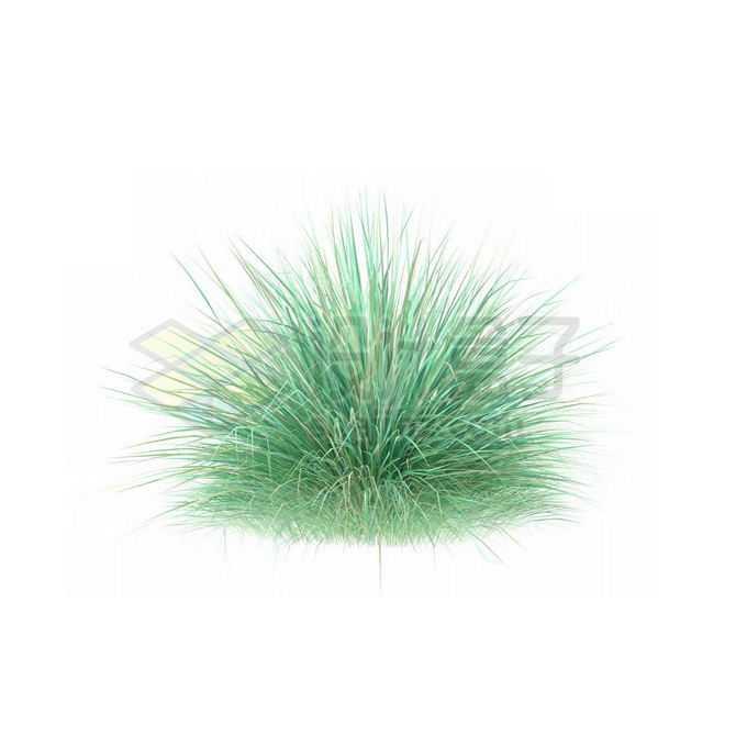 一款3D渲染的蓝羊茅细叶芒杂草丛观赏植物绿植8883311免抠图片素材
