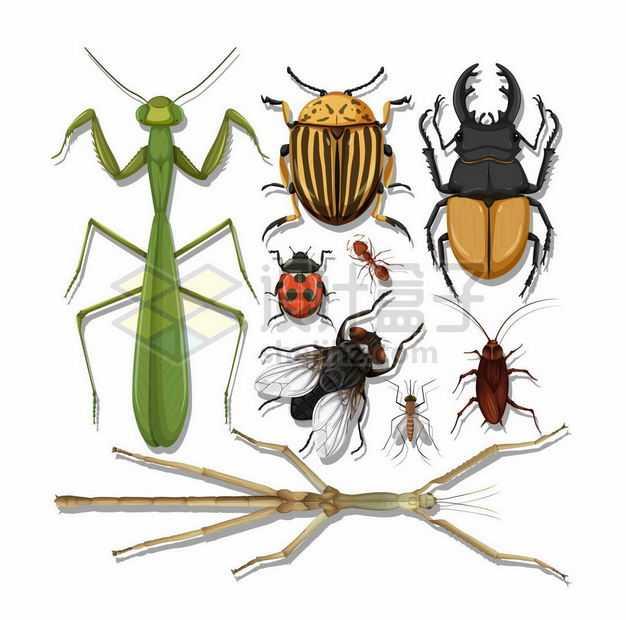 带阴影的螳螂苍蝇瓢虫蟑螂竹节虫各种昆虫俯视图8776906矢量图片免抠素材
