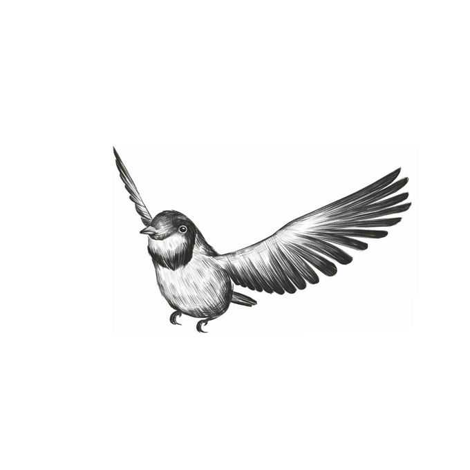 拍动翅膀的麻雀小鸟手绘素描插画5946407免抠图片素材