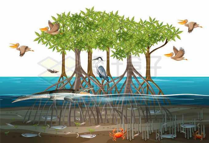 被洪水淹没的红树林和各种水鸟1042178矢量图片免抠素材免费下载