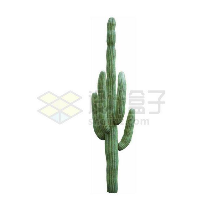 一款3D渲染的仙人棒仙人掌观赏植物2466674免抠图片素材 生物自然-第1张