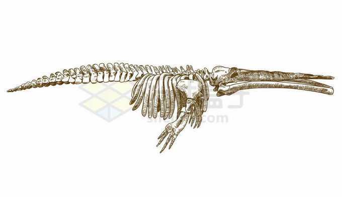 鲸鱼骨架动物骨骼手绘插画2453052矢量图片免抠素材免费下载