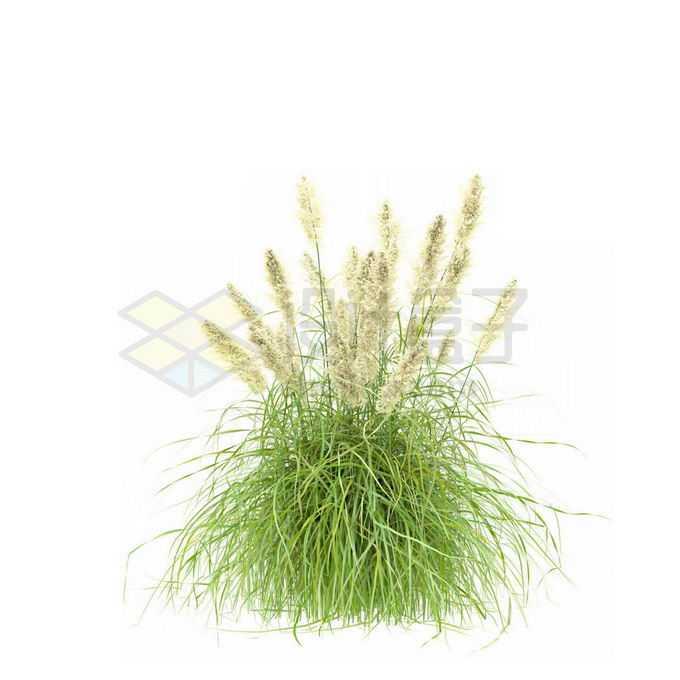 青绿色的蒲苇野草丛茅草5987277免抠图片素材