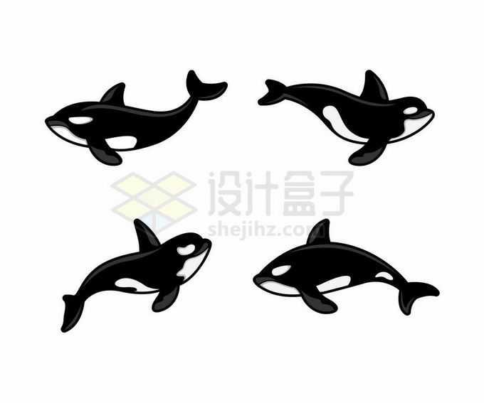 4款卡通虎鲸海洋哺乳动物3314788矢量图片免抠素材