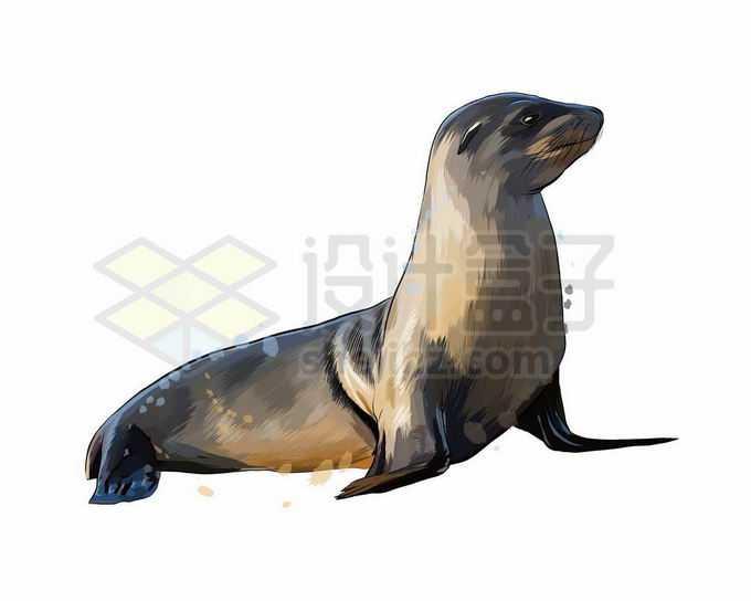 一只可爱的海狗海狮写实风格水彩插画7064703矢量图片免抠素材免费下载