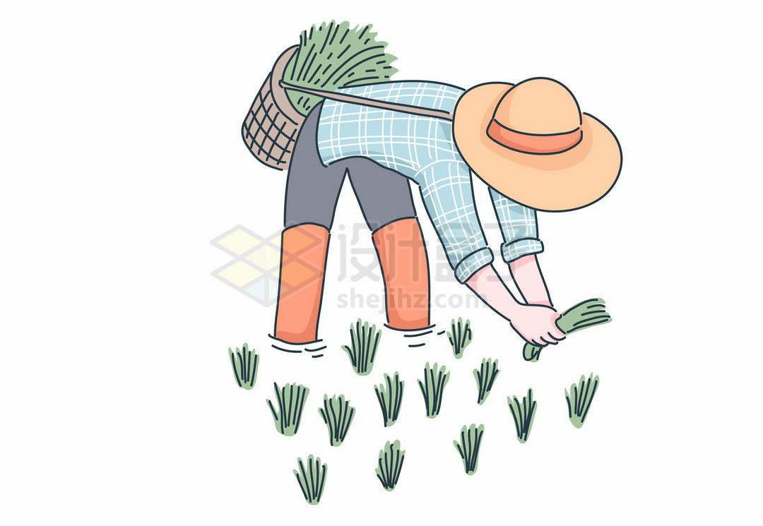 在水稻田里弯腰插秧的农民3095793矢量图片免抠素材
