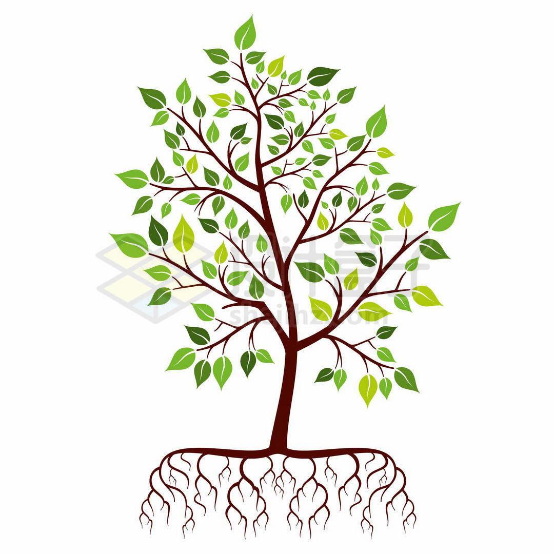 一棵长满叶子带树根的大树小树苗5378858矢量图片免抠素材