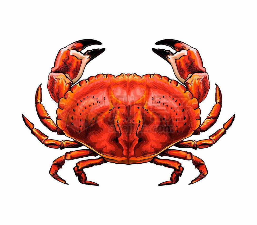 一只鲜红色的螃蟹海洋动物6486648矢量图片免抠素材