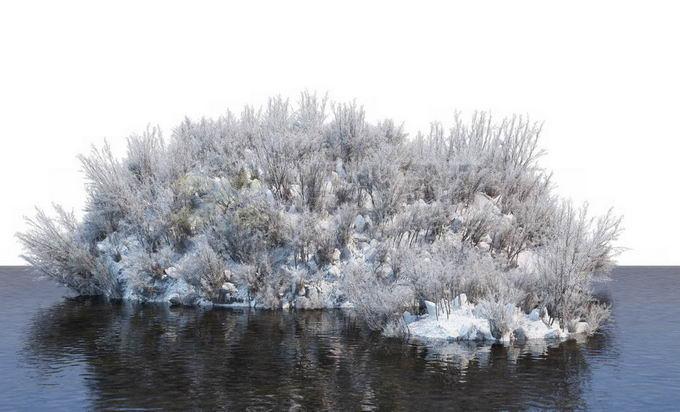 冬天被积雪覆盖的湖心小岛上的灌木丛和大树风景6616792免抠图片素材免费下载 生物自然-第1张