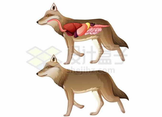 狐狸内脏器官解剖图2477439矢量图片免抠素材免费下载