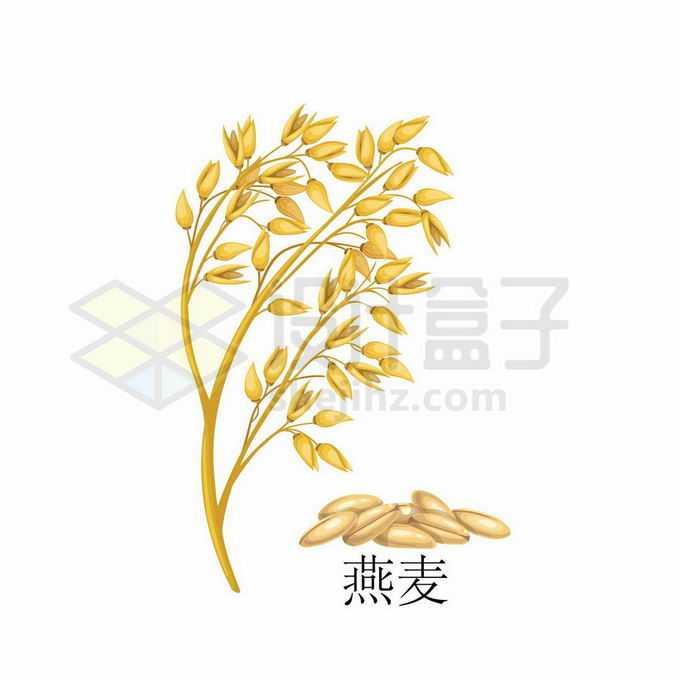 燕麦种子粮食农作物彩绘配图3969294矢量图片免抠素材