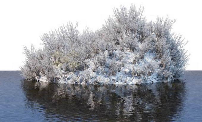 冬天被积雪覆盖的湖心小岛上的灌木丛和大树风景6162125免抠图片素材免费下载 生物自然-第1张