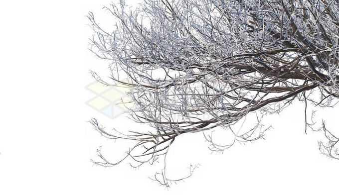 冬天下雪后的积雪大树枯树枝8733609免抠图片素材免费下载