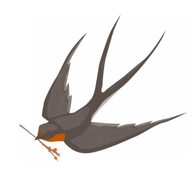 燕子雨燕小鸟儿手绘插画9660040免抠图片素材 生物自然-第1张