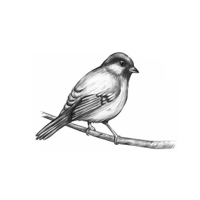 站在枝头上的麻雀小鸟手绘素描插画5244582免抠图片素材