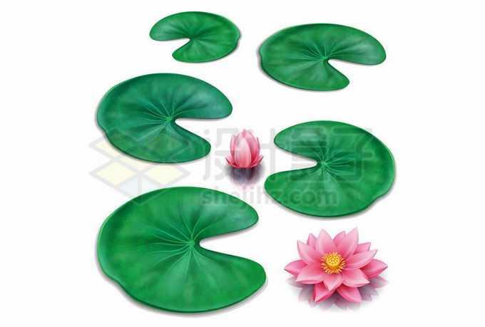 漂浮在水面上的莲叶和莲花9783563矢量图片免抠素材免费下载
