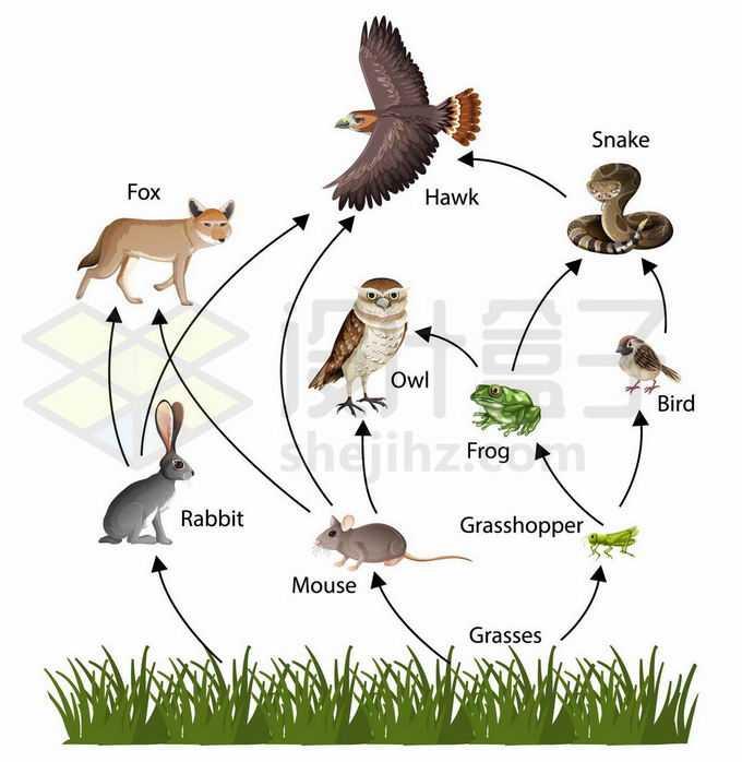 自然界生物链食物链示意图3292346矢量图片免抠素材免费下载