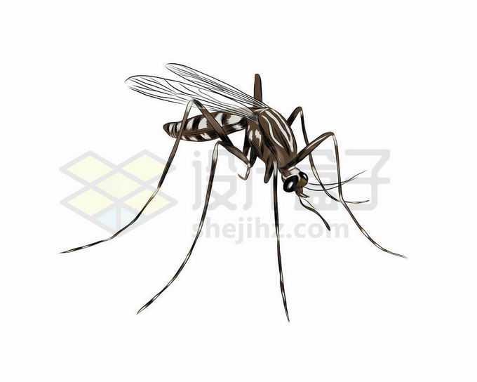 一只趴着准备吸血的蚊子手绘插画1705883矢量图片免抠素材免费下载