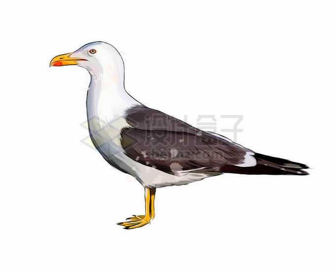 一只站立不动的海鸥海鸟7840272矢量图片免抠素材