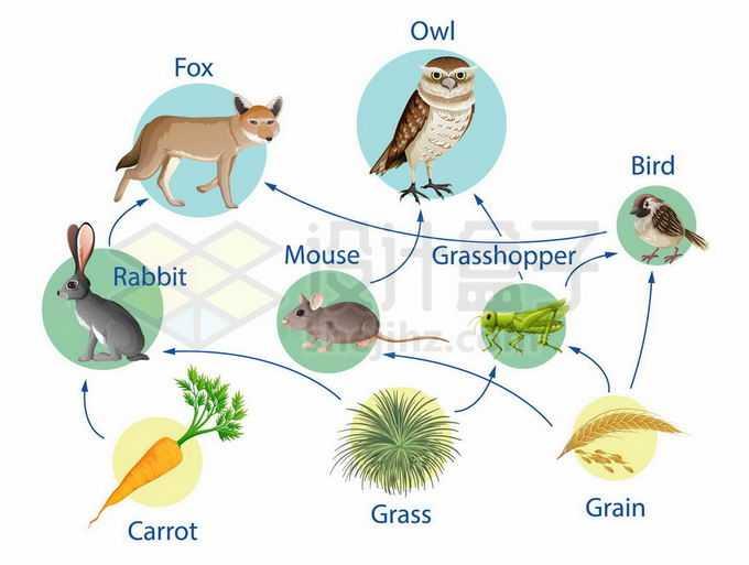 自然界动植物之间的生物链食物链示意图2623970矢量图片免抠素材免费下载