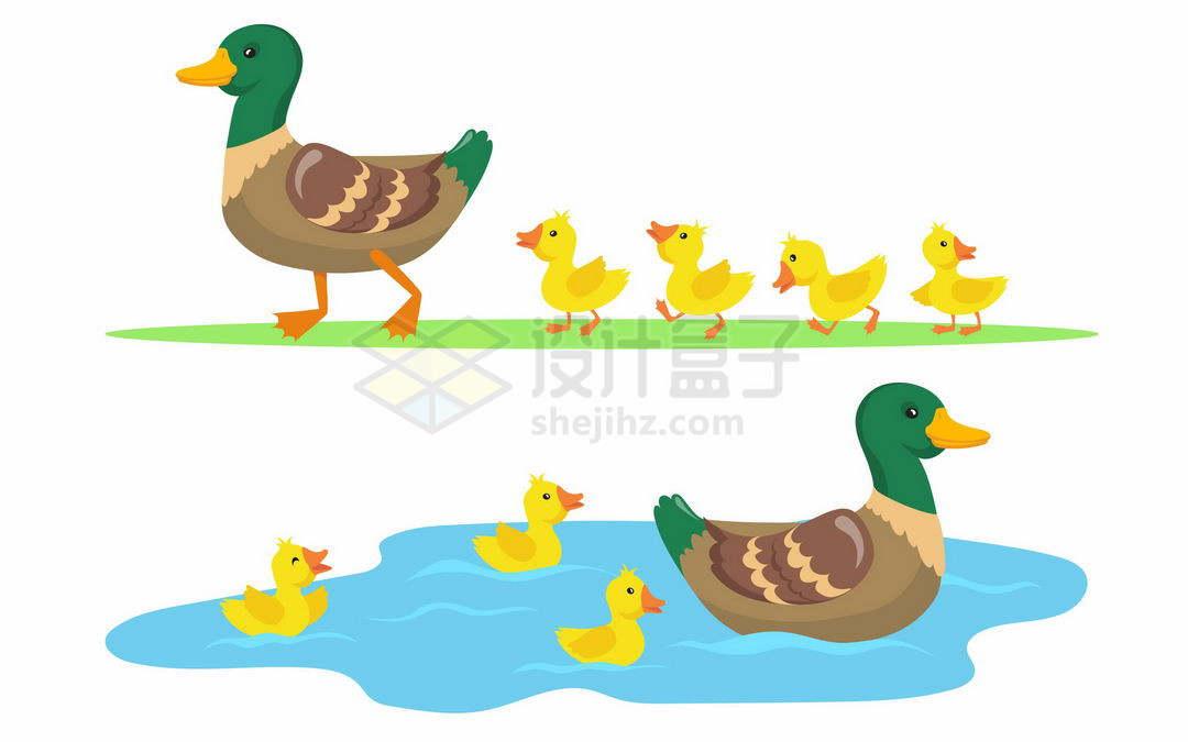 2款鸭子妈妈带着小鸭子小黄鸭散步和游泳4520521矢量图片免抠素材