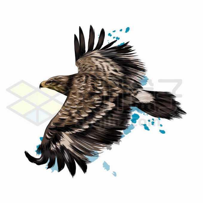一只展翅飞翔的雄鹰老鹰写实风格水彩插画4535784矢量图片免抠素材免费下载