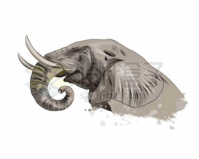 一只长着长长象牙的大象头部写实风格水彩插画9790908矢量图片免抠素材免费下载