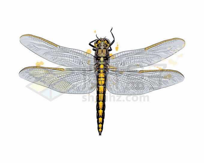 一只金色的蜻蜓昆虫写实风格水彩插画9839469矢量图片免抠素材免费下载