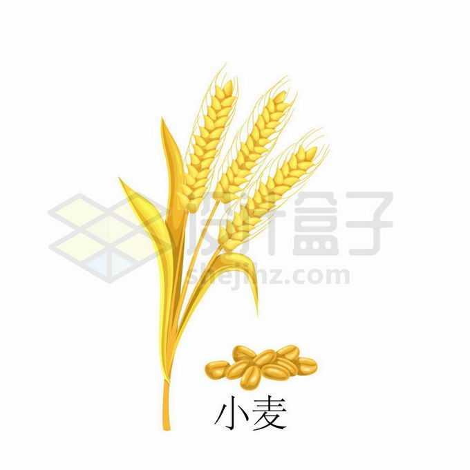 小麦麦粒种子粮食农作物彩绘配图2134655矢量图片免抠素材
