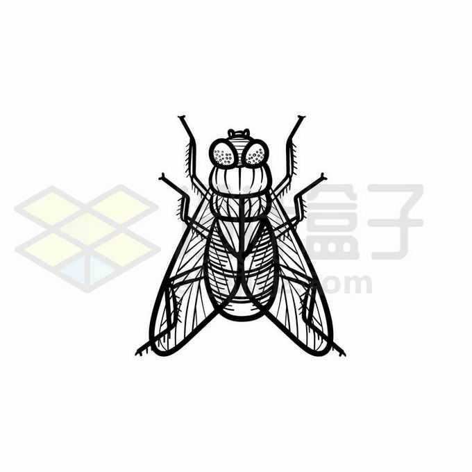 苍蝇手绘线条插画6298268矢量图片免抠素材免费下载