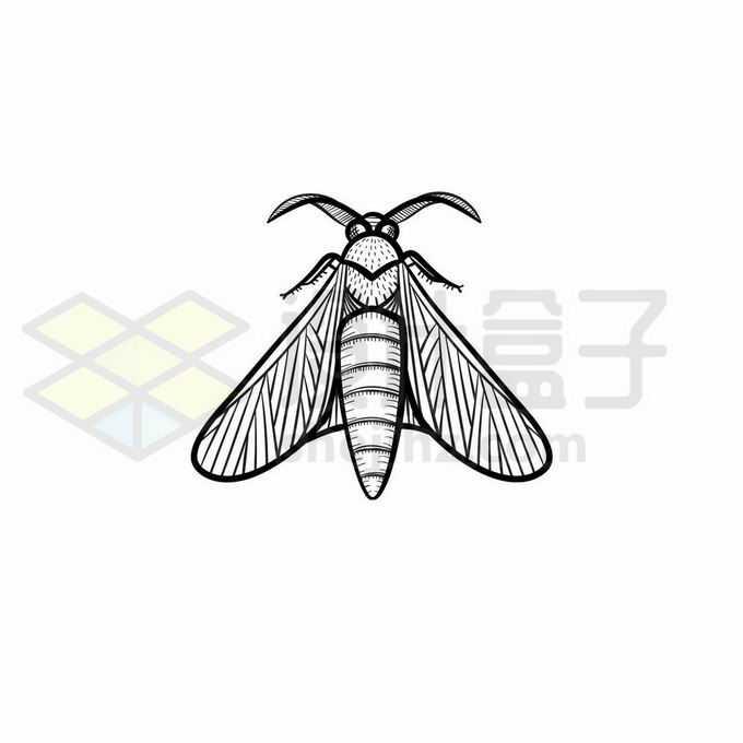 飞蛾蛾子手绘线条插画7838908矢量图片免抠素材免费下载