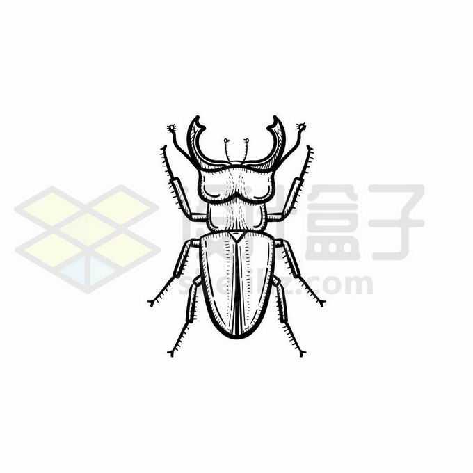 黄金鬼锹甲虫手绘线条插画3284158矢量图片免抠素材免费下载