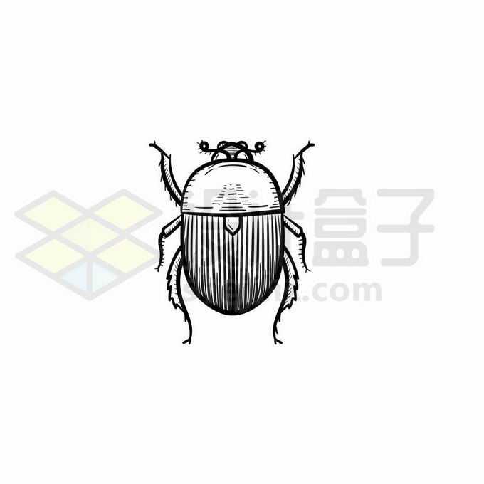 马铃薯甲虫手绘线条插画2835225矢量图片免抠素材免费下载
