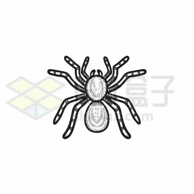 蜘蛛手绘线条插画4512463矢量图片免抠素材免费下载