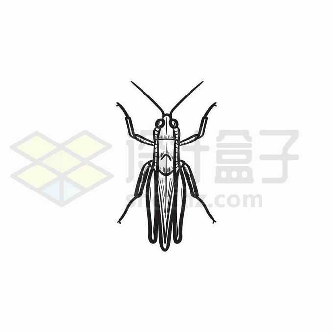 蚂蚱蝗虫手绘线条插画4835693矢量图片免抠素材免费下载