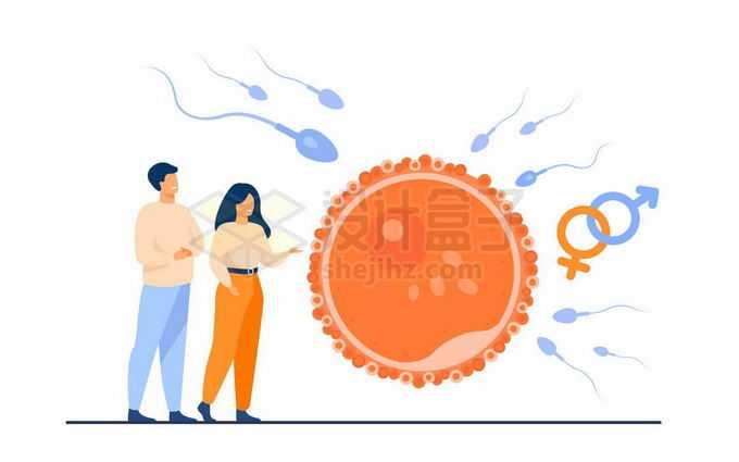 夫妻两个正在讨论精子和卵子的结合备孕准备4722776矢量图片免抠素材免费下载
