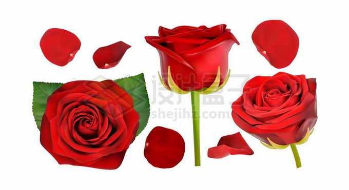 逼真的玫瑰花和红色花瓣8013313矢量图片免抠素材免费下载