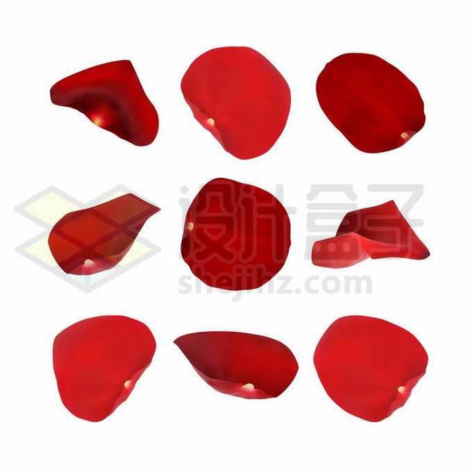 9款逼真的红色玫瑰花花瓣4971024矢量图片免抠素材免费下载