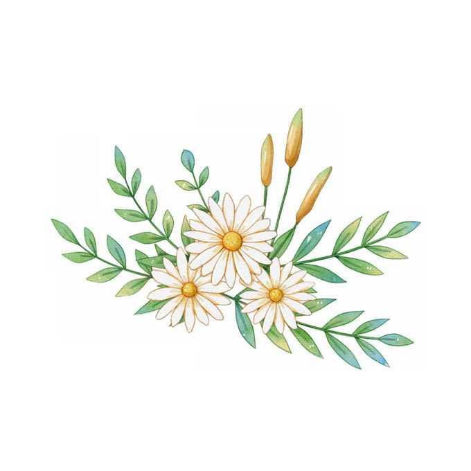 带绿叶盛开的野菊花小野花手绘插画2546599矢量图片免抠素材免费下载