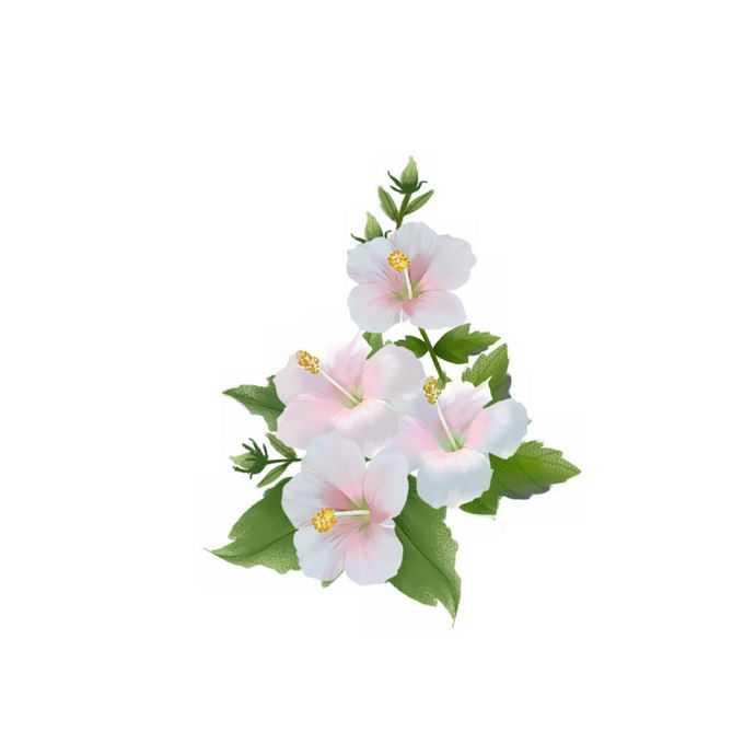 白色木槿花鲜花花朵1539080矢量图片免抠素材免费下载