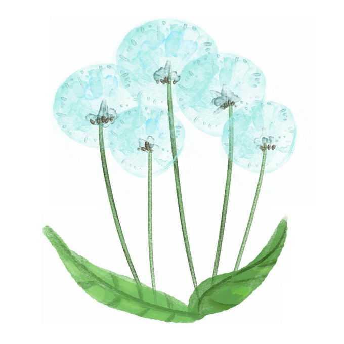 盛开的淡蓝色蒲公英水彩插画3490823矢量图片免抠素材免费下载