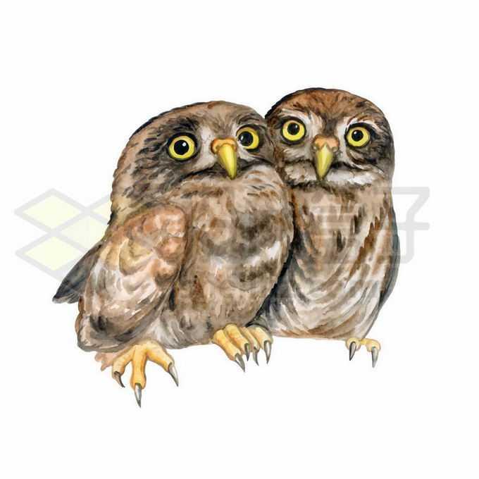 两只可爱的猫头鹰依偎在一起6932746矢量图片免抠素材免费下载