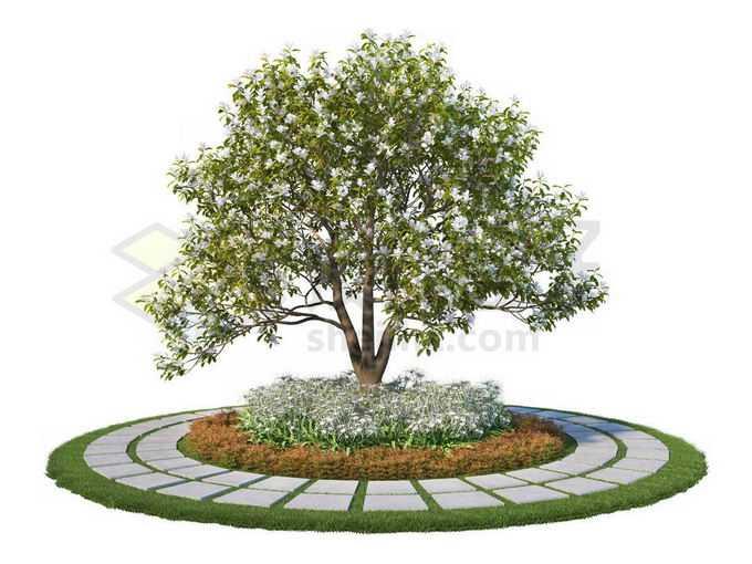 公园环形石板路面和中间的大树上开着白花3808201PSD免抠图片素材