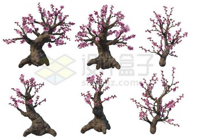 6棵黄岩梅桩梅花盆栽植物赏花观赏植物造景2730879PSD免抠图片素材