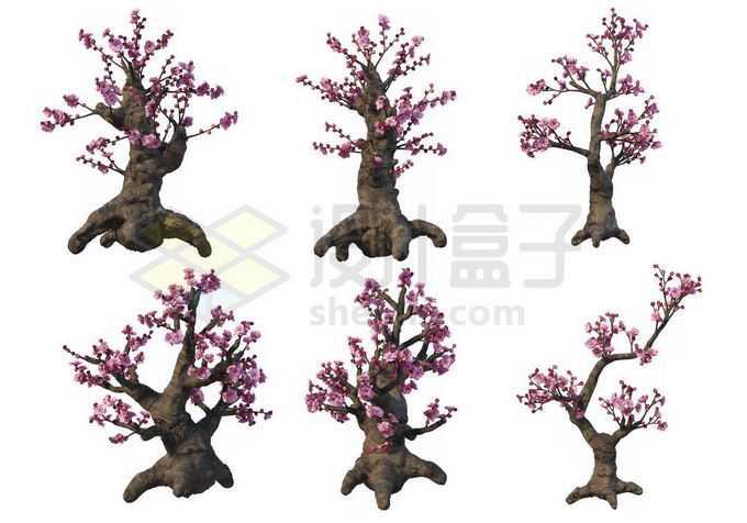 6棵黄岩梅桩梅花盆栽植物赏花观赏植物1763937PSD免抠图片素材