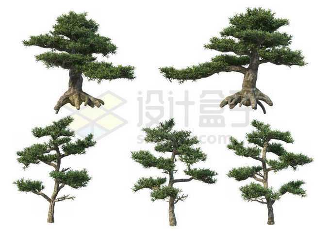 5棵罗汉松迎客松大型盆栽植物观赏植物造景3220124PSD免抠图片素材